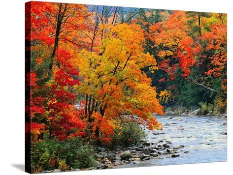 Stream in Autumn Woods--Stretched Canvas Print