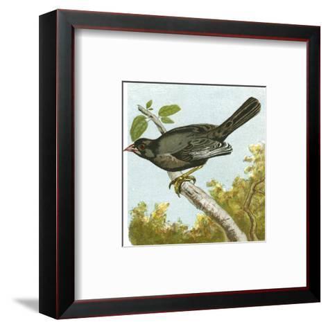 Mini Vintage Birds IV--Framed Art Print