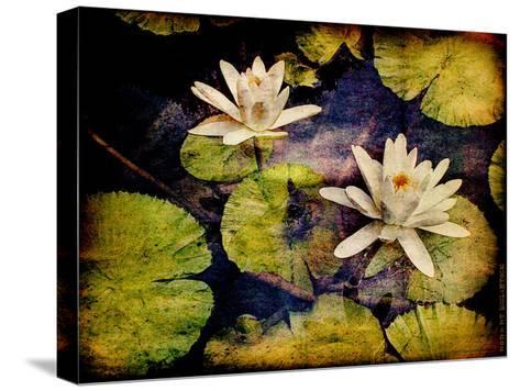 Lily Ponds V-Robert Mcclintock-Stretched Canvas Print