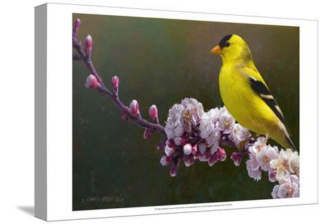 Goldfinch Flowers-Chris Vest-Stretched Canvas Print
