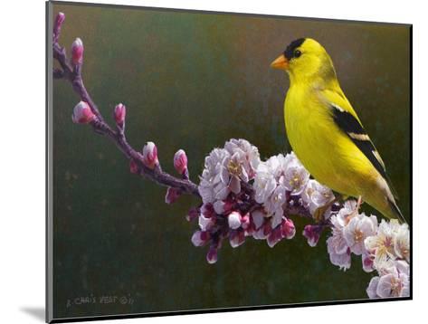 Goldfinch Flowers-Chris Vest-Mounted Art Print