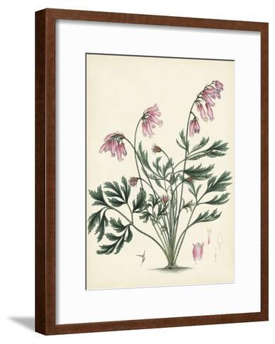 Splendors of Botany VII--Framed Art Print