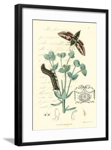 Naturalist's Montage I-Vision Studio-Framed Art Print