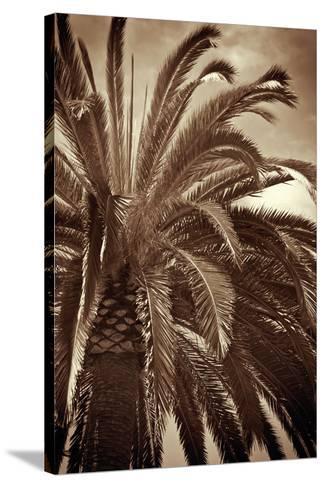 Whispering Palm-Jennifer Broussard-Stretched Canvas Print