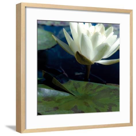 Water Lilies II-Jennifer Broussard-Framed Art Print