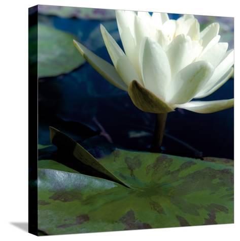 Water Lilies II-Jennifer Broussard-Stretched Canvas Print