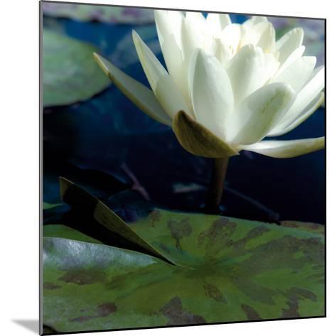 Water Lilies II-Jennifer Broussard-Mounted Art Print