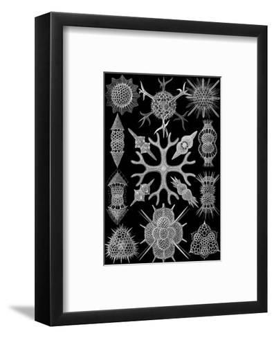 Microscopic Spumellaria-Ernst Haeckel-Framed Art Print