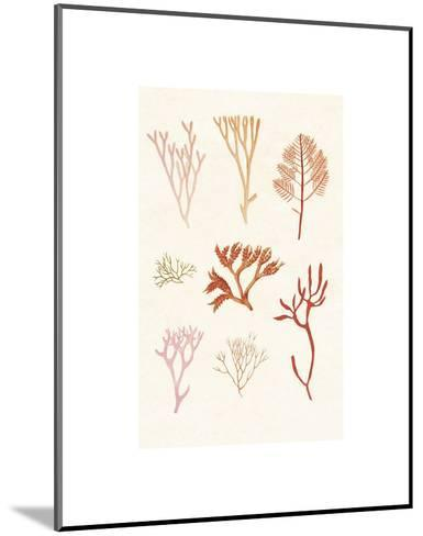 Algae 7--Mounted Art Print