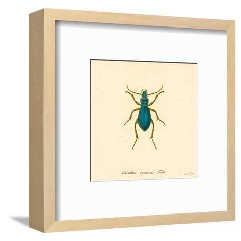 Carabus Cyaneus-A^ Poiteau-Framed Art Print