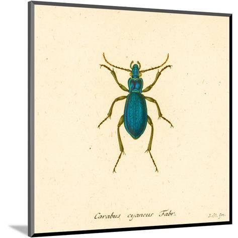 Carabus Cyaneus-A^ Poiteau-Mounted Art Print