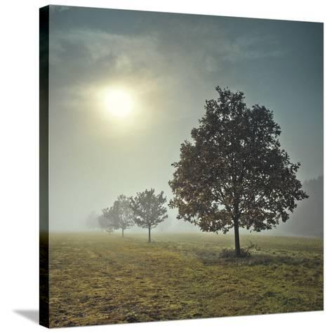 It's a New Day-Assaf Frank-Stretched Canvas Print