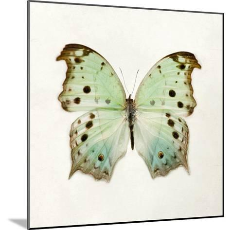 Butterfly Impression-Irene Suchocki-Mounted Giclee Print