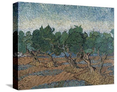 Olive Grove, 1889-Vincent van Gogh-Stretched Canvas Print