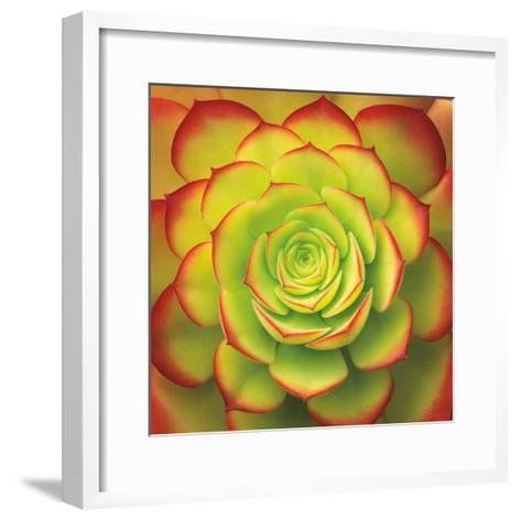 Fiery Succulent-Jan Bell-Framed Art Print