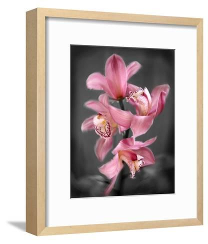Cymbidium Orchid Bright Pink-Igor Maloratsky-Framed Art Print