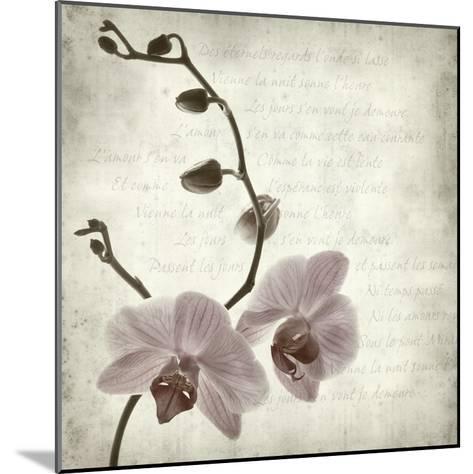Retro Orchid--Mounted Art Print