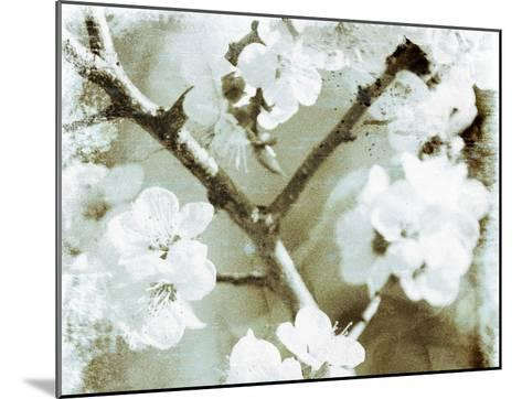 White Blossoms in Sepia II--Mounted Art Print