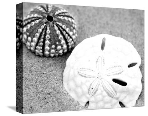Sand Dollar and Sea Urchin--Stretched Canvas Print