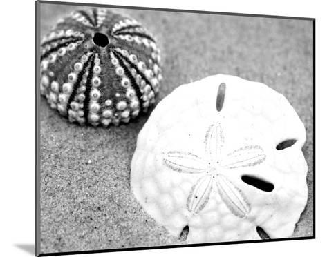 Sand Dollar and Sea Urchin--Mounted Art Print