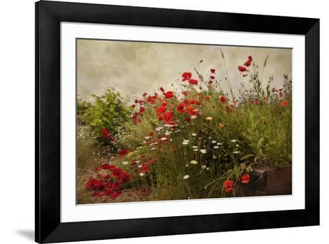 Poppy Garden-David Winston-Framed Art Print