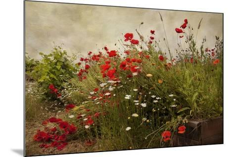 Poppy Garden-David Winston-Mounted Art Print