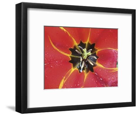 After the Rain 2032-Brian Leighton-Framed Art Print
