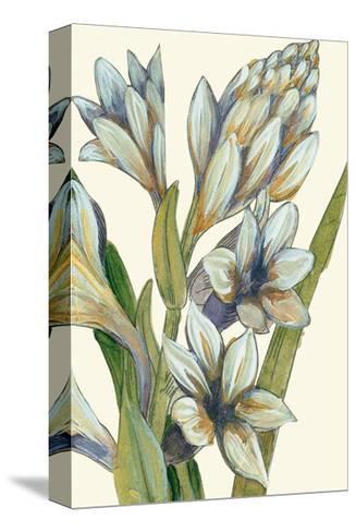 Restful Gaze II - Detail-Augustine-Stretched Canvas Print
