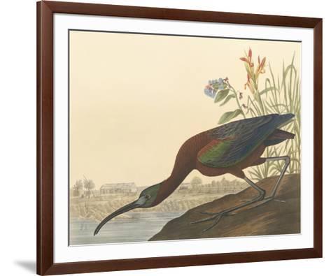 The Glossy Ibis-John James Audubon-Framed Art Print