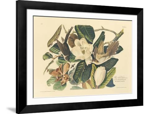 The Black Billed Cuckoo-John James Audubon-Framed Art Print