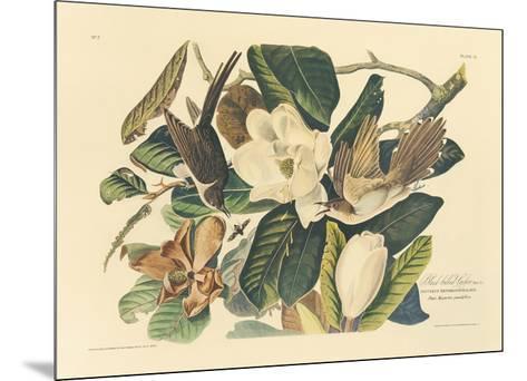 The Black Billed Cuckoo-John James Audubon-Mounted Premium Giclee Print