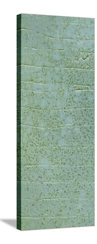 Boardwalk VI-Grant Louwagie-Stretched Canvas Print
