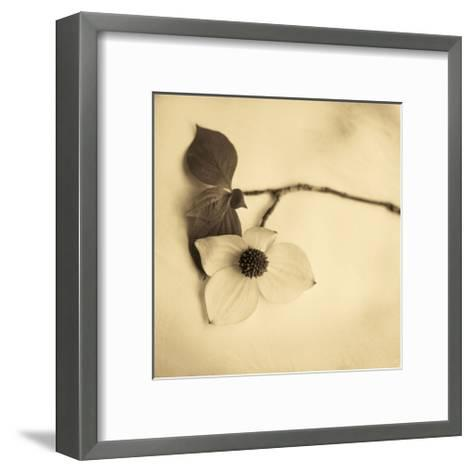 Sepia Dogwoods I-Heather Johnston-Framed Art Print