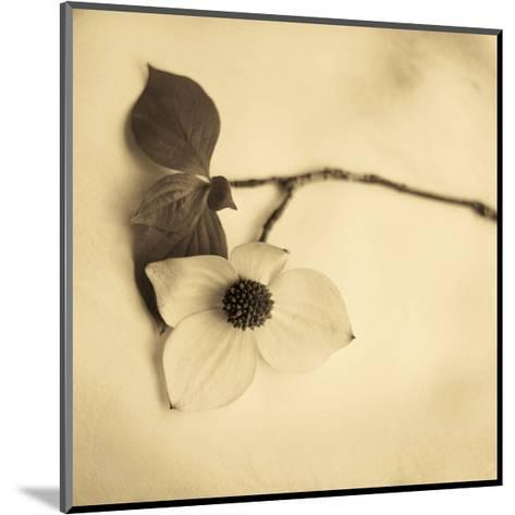 Sepia Dogwoods I-Heather Johnston-Mounted Giclee Print