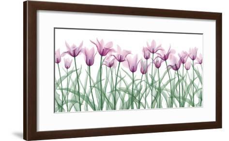 Floral Delight II-Jim Wehtje-Framed Art Print