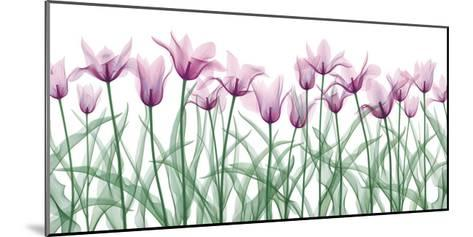 Floral Delight II-Jim Wehtje-Mounted Giclee Print