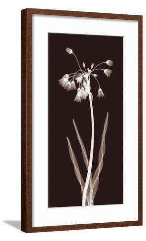 Nectar Twist-Jim Wehtje-Framed Art Print