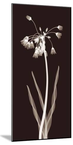 Nectar Twist-Jim Wehtje-Mounted Giclee Print