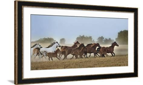 Freedom-Xavier Ortega-Framed Art Print