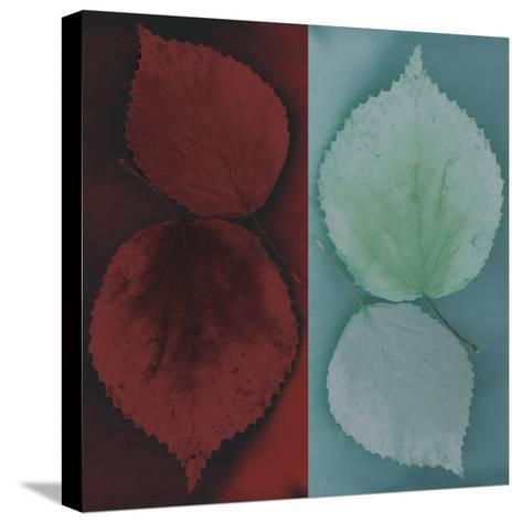 Sycamore-Jane Ann Butler-Stretched Canvas Print