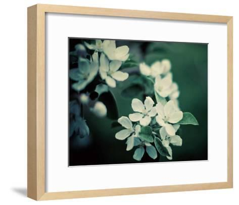 The Midnight Garden II-Irene Suchocki-Framed Art Print