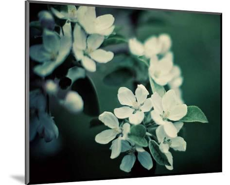 The Midnight Garden II-Irene Suchocki-Mounted Art Print