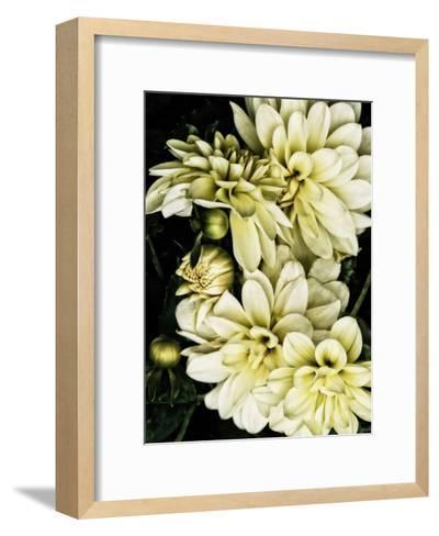 Lemon Dahlias I-Rachel Perry-Framed Art Print