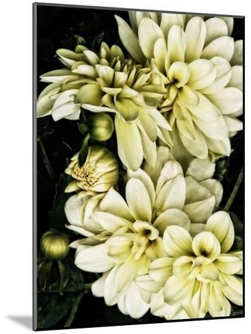 Lemon Dahlias I-Rachel Perry-Mounted Art Print