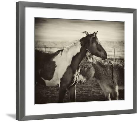 Kissing Horses II-David Drost-Framed Art Print