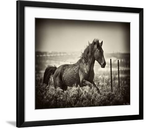 Running Horse-David Drost-Framed Art Print