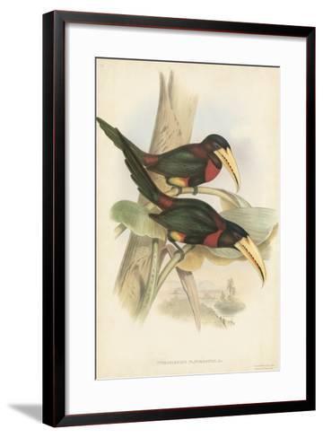 Tropical Toucans VII-John Gould-Framed Art Print