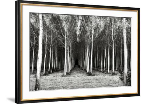 Alley At Lac D'uby-Colby Chester-Framed Art Print