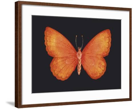 Summer Butterfly V-Sophie Golaz-Framed Art Print