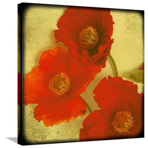 Fresh Poppies II-Rossana Novella-Stretched Canvas Print